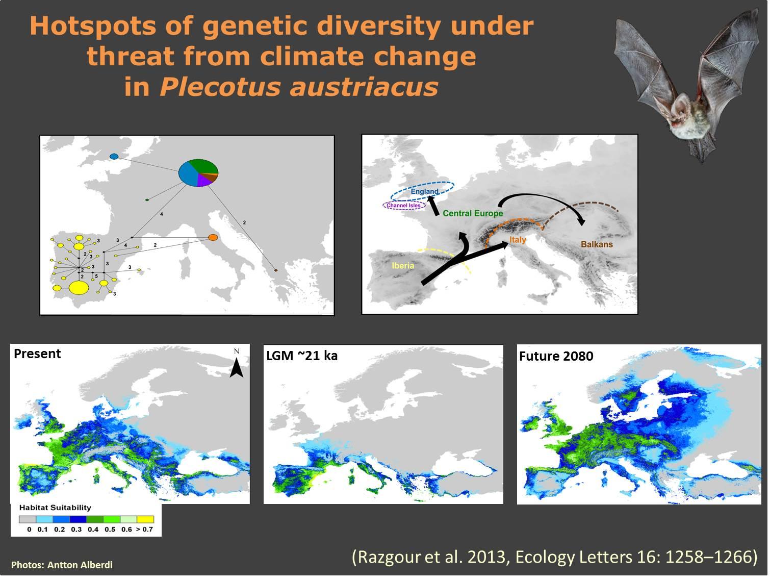Razgour et al. 2013_Phylogegoraphy_Plecotus_austriacus