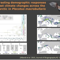 Contrasting population-level responses to Pleistocene climatic changes in widely distributed species