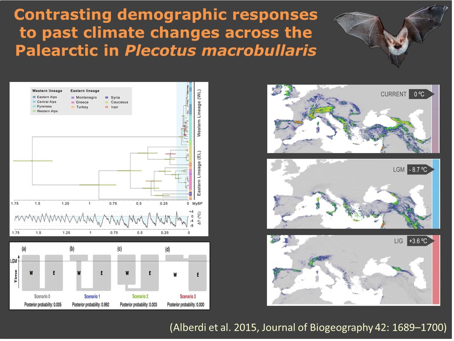 Phylogeography_macrobullaris