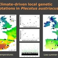 Razgour et al. Climatic adaptations bats